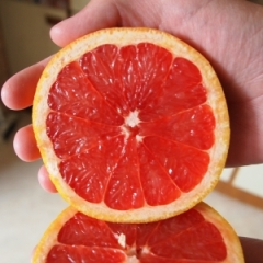 red-grapefruit-1-1427674-m